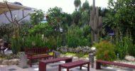 sing_gallery_cactus-garden__1